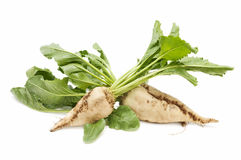 Sugar beet Royalty Free Stock Images