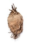 Sugar beet. One sugar beet root isolated on white stock image