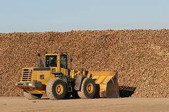 Sugar beet. Being moved by bulldozer to a nearby processing plant royalty free stock photos