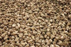 Sugar beet Royalty Free Stock Images
