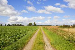 Sugar beet and farm track Royalty Free Stock Photography