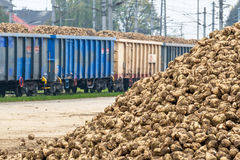 Sugar beet and freight Stock Image