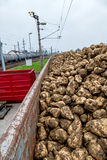 Sugar beet and freight Royalty Free Stock Images