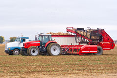 Sugar beet harvest Stock Images