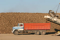 Sugar beet harvest. Truck waiting in front of a mountain of sugar beet after having offloaded. the remaining dirt is loaded back onto the truck and the driver stock images