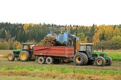 Sugar Beet Harvest ad ottobre Immagini Stock Libere da Diritti