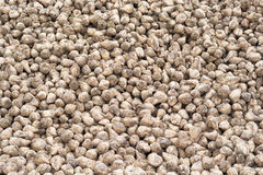 Sugar beet after harvest Stock Photography