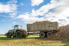 A sugar beet harvest in progress - Tractor and trailer unload sugar beets Royalty Free Stock Image