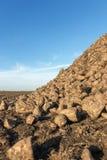 Sugar Beet harvest, Sugar beet pile, Harvest. Royalty Free Stock Image