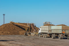 Sugar beet harvest - truck waiting in front of off-loaded beet  Stock Photography