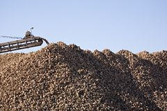 Sugar beet industry Royalty Free Stock Images