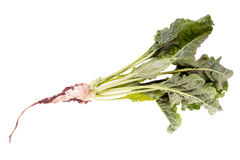 Sugar beet. Isolated over a white background royalty free stock images