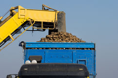Sugar beet loading Royalty Free Stock Photography