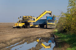 Sugar beet loading process Stock Photos