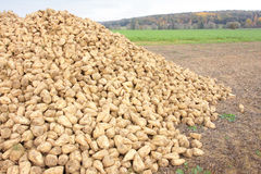 Sugar beet pile Stock Photo
