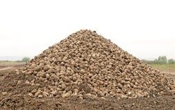 Sugar beet pile Royalty Free Stock Images