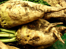 Sugar beets. Roots after harvesting Royalty Free Stock Images