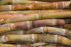 Sugar cane Royalty Free Stock Photos