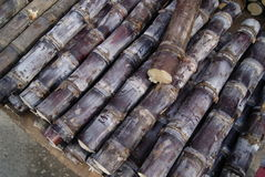 Sugar cane Royalty Free Stock Photo