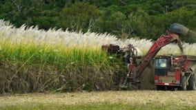 Sugar Cane vídeos de arquivo