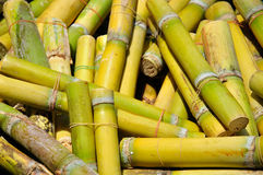 Sugar Cane. One type of fruit in Thailand stock images