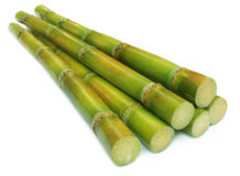 Sugar cane. Over white background stock photography