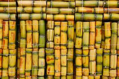 Sugar cane. Packs of sugar cane ready to sale, South America Royalty Free Stock Photography
