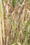 Sugar cane, Stock Photos