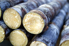 Sugar cane. In winter, sugar cane for sale in the market. Sugarcane is one of the people like to eat food Royalty Free Stock Image