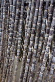 Sugar cane Royalty Free Stock Photography