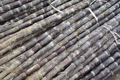 Sugar cane Stock Images