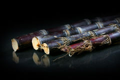 Sugar cane Stock Image