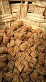 Sugar Cane Imagens de Stock