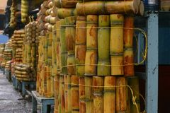 Sugar cane. On a fair in Banos, Andes, Ecuador Royalty Free Stock Photo