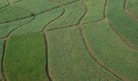 Sugar Cane Stockfotos