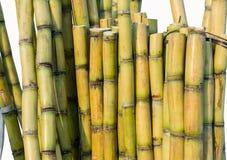 Sugar Cane Royaltyfria Foton