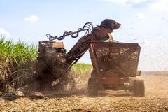Sugar Cane royalty-vrije stock foto