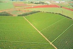 Sugar Cane Fotografering för Bildbyråer