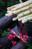 Sugar cane. On a fair in Banos, Andes, Ecuador Royalty Free Stock Image