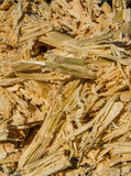 Sugar cane bagasse Royalty Free Stock Photo