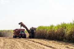 Sugar cane. Bariri, São Paulo, Brazil, October 10, 2008. Sugar cane harvesting in Brazil Royalty Free Stock Photos