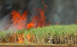 Sugar cane burned Stock Photography