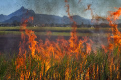 Sugar Cane Burning and Mount Warning in Australia. Burning of the sugar cane fields, Murwillumbah, New South Wales, Australia. Mount Warning can be seen in the Royalty Free Stock Images