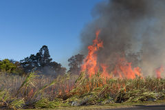 Sugar cane burning. Murwillumbah NSW Australia Stock Photos