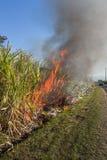 Sugar cane burning. Murwillumbah NSW Australia Royalty Free Stock Image