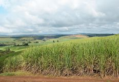 Sugar cane country. Sugar cane forms the foreground of a large field near Harding on the south coast of KZN SA Royalty Free Stock Image
