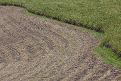 Sugar Cane Crop Field Harvest Royalty Free Stock Photos