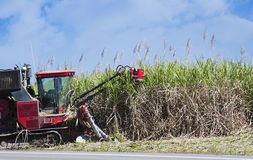 Sugar cane cutting Royalty Free Stock Photo
