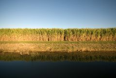 Sugar Cane Farm Stock Image
