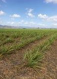 Sugar Cane Farming - Queensland del norte lejano Australia imagenes de archivo